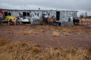 horses-+-sheep-in-gray-mtn-ii